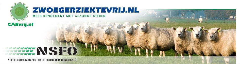 zwoegerziekte.nl   zwoegerziektevirus   maedi visna